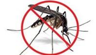 Grafika komara