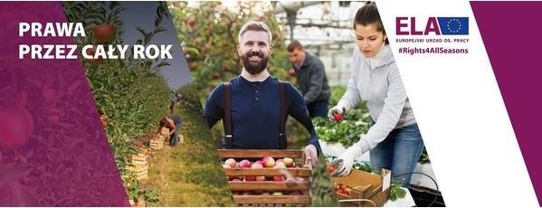 """Plakat dotyczący kampanii na temat pracy sezonowej w UE ,,Prawa Przez Cały Rok""""  Na plakacie widnieje uśmiechnięty mężczyzna ze skrzynką jabłek, kobieta pracująca wraz z mężczyzną na plantacji pomidorów i zdjęcie przedstawiające sad jabłoni i prace w nim."""