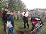 Galeria 100 drzew na stulecie niepodległości Polski